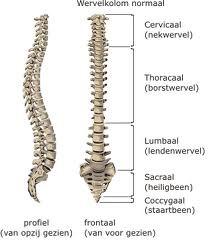 Anatomie van de wervelkolom